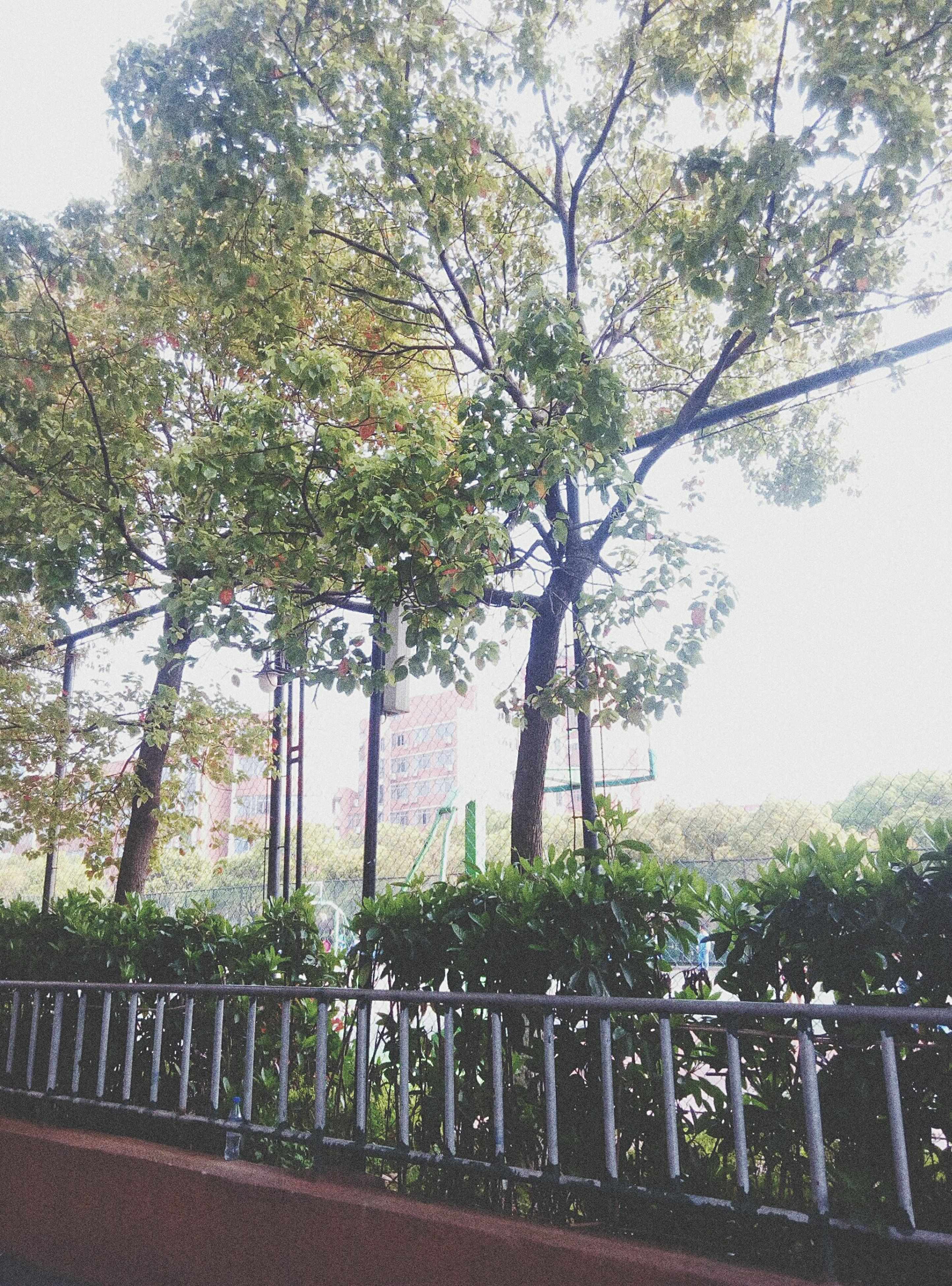 tree, growth, railing, day, nature, outdoors, no people, branch, beauty in nature, sky