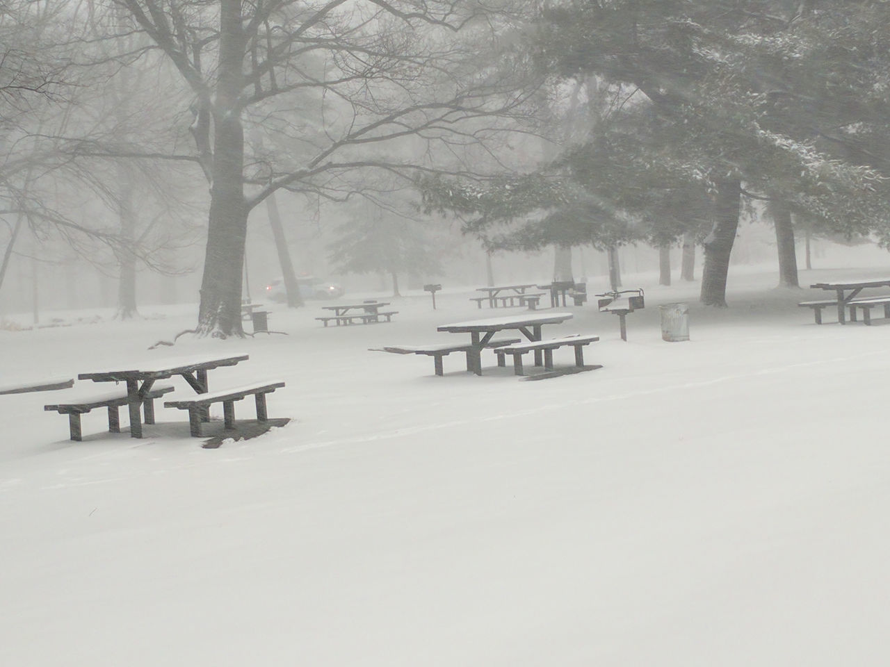 Almost Black&white Brooklyn City Park Nature Park Picnic Tables Picnic Tables In The Snow Prospect Park Snow Snowscape Snowstorm2016 Urban Nature White Whiteout Winter