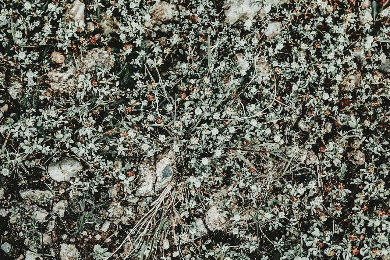 Lauraloophotography Backgrounds Full Frame Pattern Abstract Textured  No People Day Close-up Nature Outdoors Flower Plant