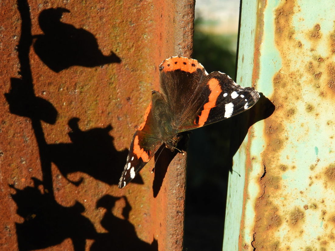 Animal Themes Animal Wildlife Animals In The Wild Architecture Building Exterior Built Structure Butterfly Butterfly - Insect Close-up Day Nature No People One Animal Outdoors Perching Shadow Sunlight