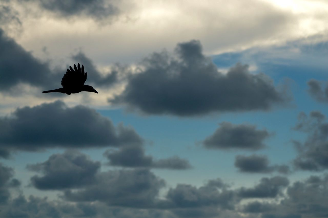 Beautiful Sky Check This Out Beach Photography Periyambalam Beach Crow