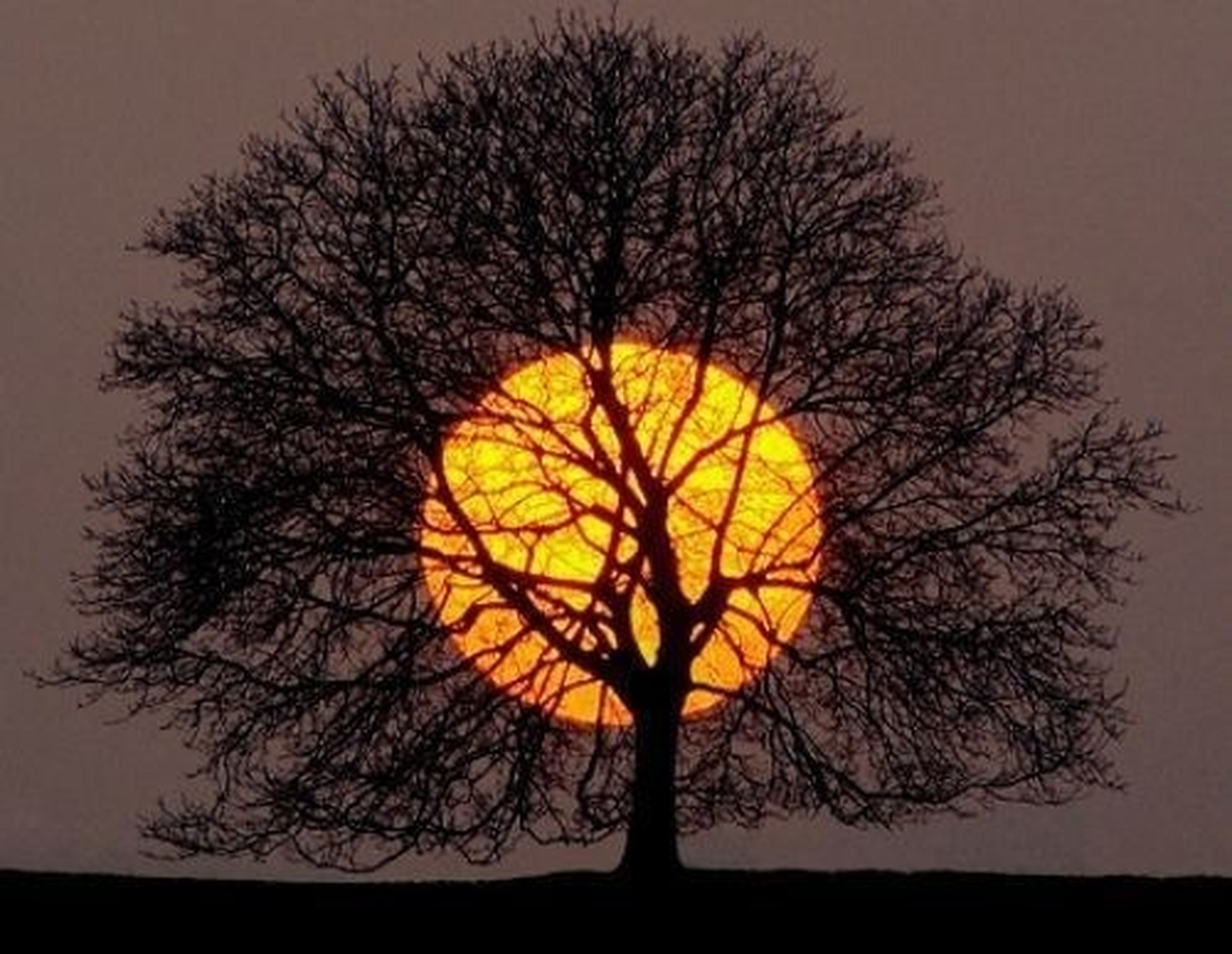 silhouette, sunset, bare tree, tree, branch, sky, orange color, low angle view, tranquility, nature, beauty in nature, scenics, circle, tranquil scene, outdoors, no people, dusk, cloud - sky, dark, outline