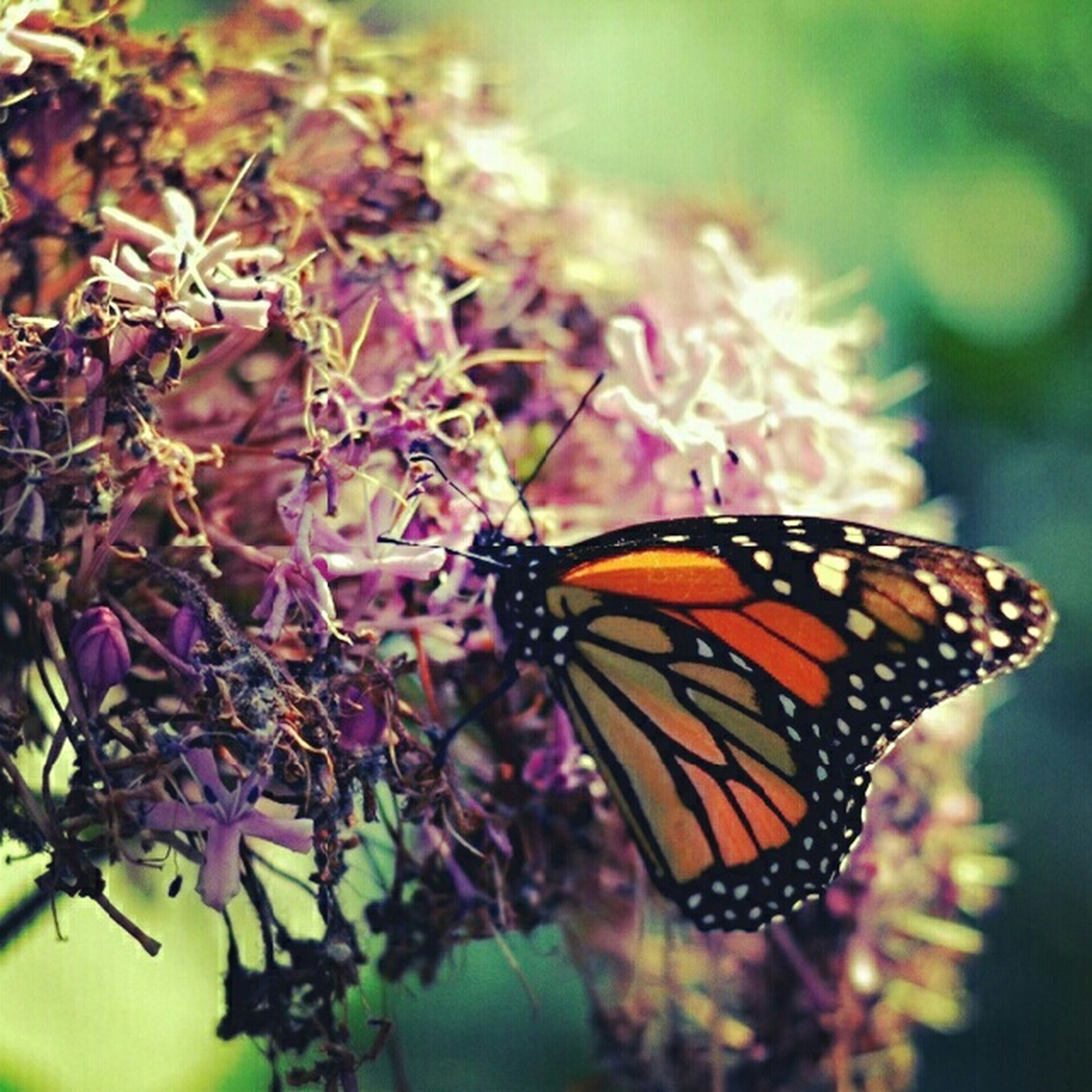 insect, one animal, animal themes, animals in the wild, butterfly - insect, wildlife, butterfly, close-up, focus on foreground, flower, animal markings, beauty in nature, plant, nature, fragility, animal wing, natural pattern, pollination, growth, freshness