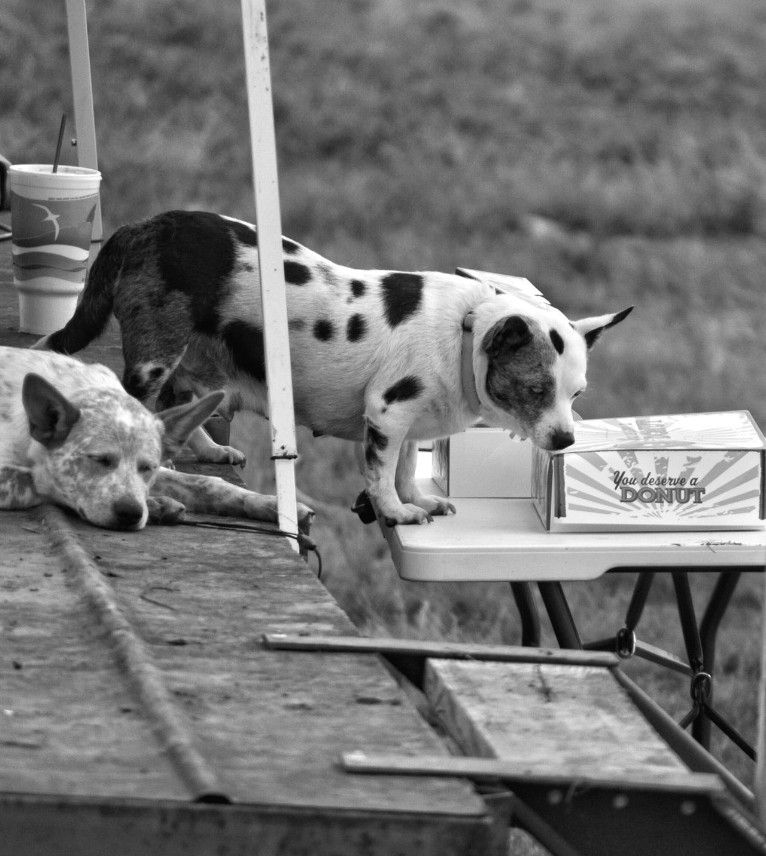 Sonora Texas This Week On Eyeem Nikonphotography Eye4photography  West Texas Fine Art Photography Photoart Dogslife Dogs Dogs Of EyeEm Dogs Of Summer Dogsleeping Black & White Black And White Collection  Blackandwhite #bnw #monochrome #instablackandwhite #monoart #insta_bw #bnw_society #bw_lover #bw_photooftheday #bw #bw_society #bw_crew #bwwednesday #insta_pick_bw #bwstyles_gf #irox_bw #igersbnw #bwstyleoftheday #monotone #monochromatic#noir #fineart_ph Black And White Collection! Donuts Save The World Donuts🍩 Donut Time! Donuts❤❤❤❤👌👌 Donutporn