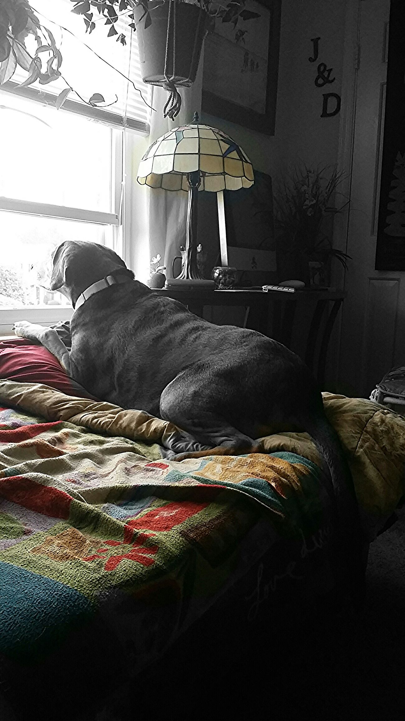 Dog Dogslife Chillin Colorsplash Relaxing Enjoying Life Looking To The Other Side I Love My Dog Hound Furkids