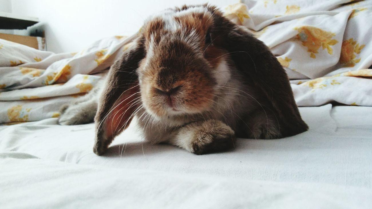 Animal Themes One Animal Domestic Animals Pets Taking Photos First Eyeem Photo Rabbit ❤️ Rabbits 🐇 Rabbit Bunny  Bunny 🐰 Królik Króliczek