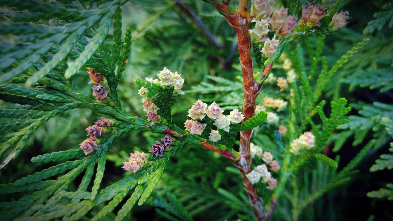 Nature_collection Fwjphotos Pine Pinecone New Growth Nature Nature Photography New Life Outdoor Photography Tree_collection