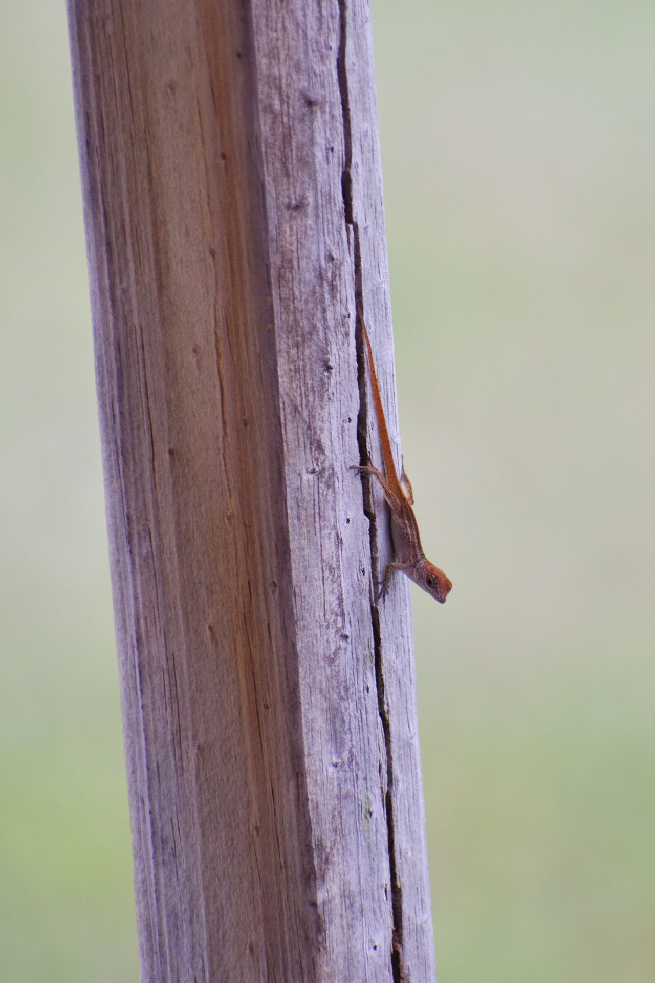One Animal Animals In The Wild Animal Themes Nature No People Animal Wildlife Tree Trunk Lizard Nature Lizard Nature Reptile Animals In The Wild Focus On Foreground Outdoors Tree Beauty In Nature Perching Reptile Close-up Bird Mammal