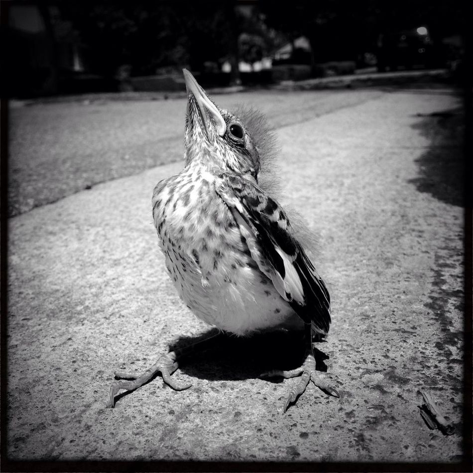 I never saw a wild thing sorry for itself. A small bird will drop frozen dead from a bough without ever having felt sorry for itself. David Herbert Lawrence