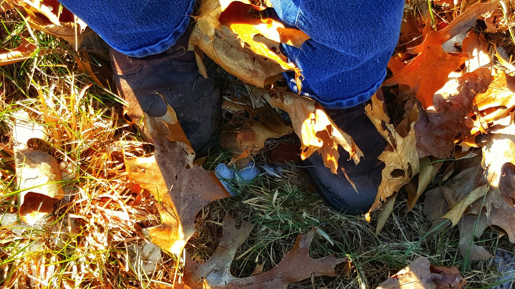 Out For A Stroll Look Closely Remnants Of Winter Country Girl Work Boots Outdoor Photography Samsung Galaxy S6 Edge Cellphone Photography Leaf 🍂 Leafporn My World ❤ Front Or Back Yard Countryside Snow ❄