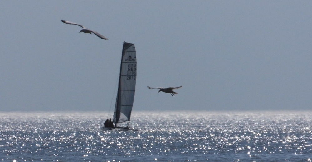 Animal Themes Beauty In Nature Bird Birds Catamaran Day Flying Mid-air Motion Nature No People Outdoors Sailing Scenics Sea Seagull Sky Spread Wings Tranquility Water Wildlife