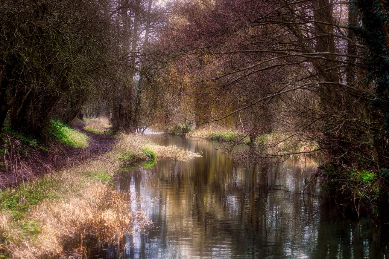 Looking down the river Beauty In Nature Day Forest Grass Growth Nature No People Outdoors Reflection Scenics Tranquil Scene Tranquility Tree Water