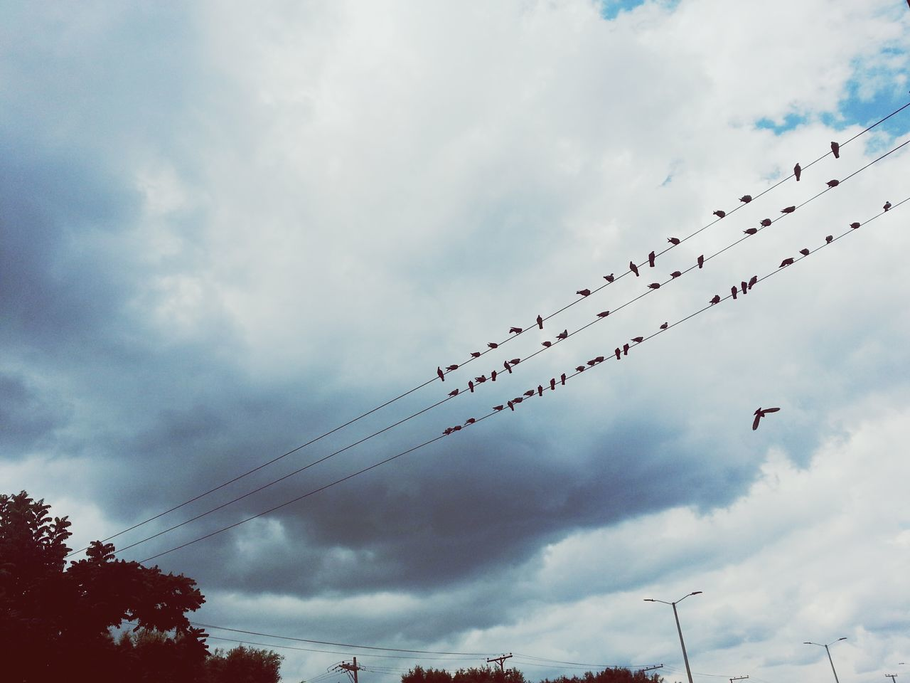 Low Angle View Of Birds Perching On Power Line Against Sky