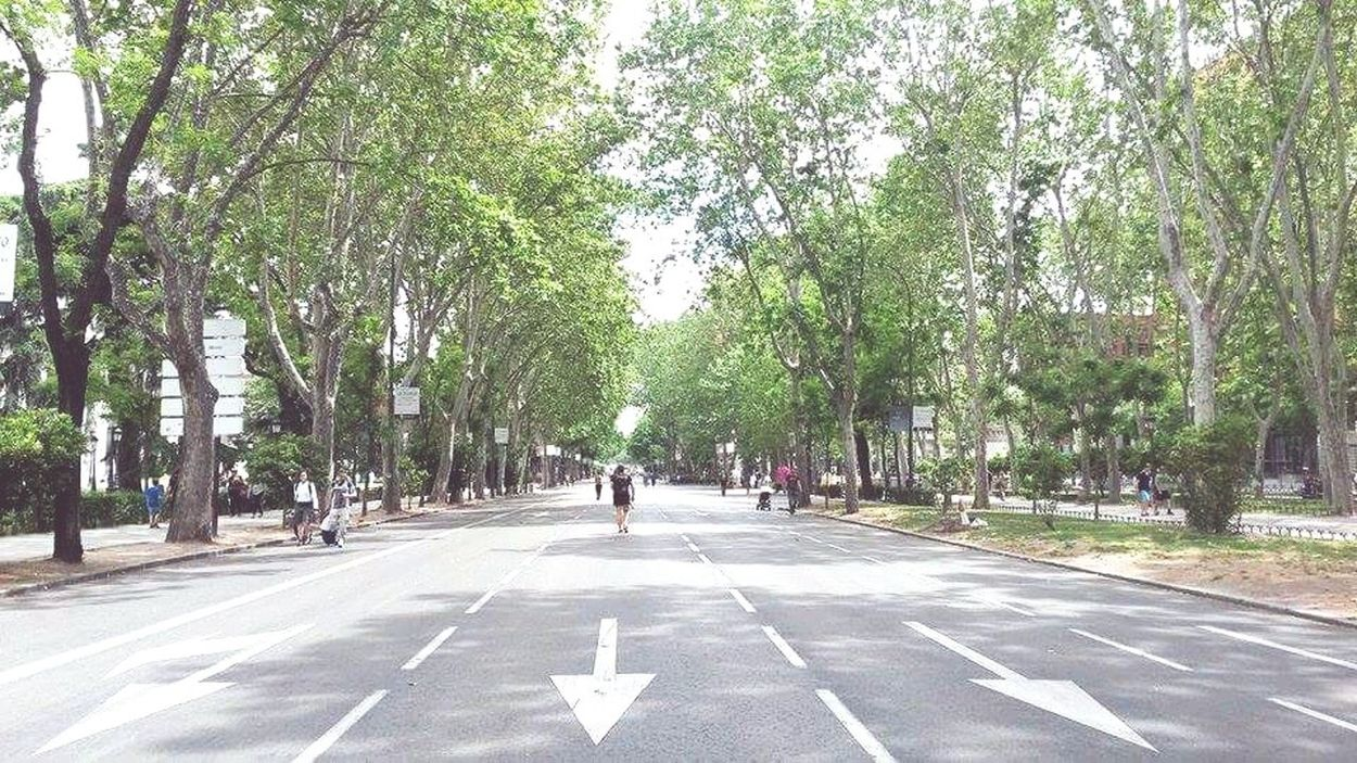 Tree Road Day Road Sign Madrid, Spain Sunday Afternoon Summer Paseo Del Prado Tranquility Holiday Erasmus