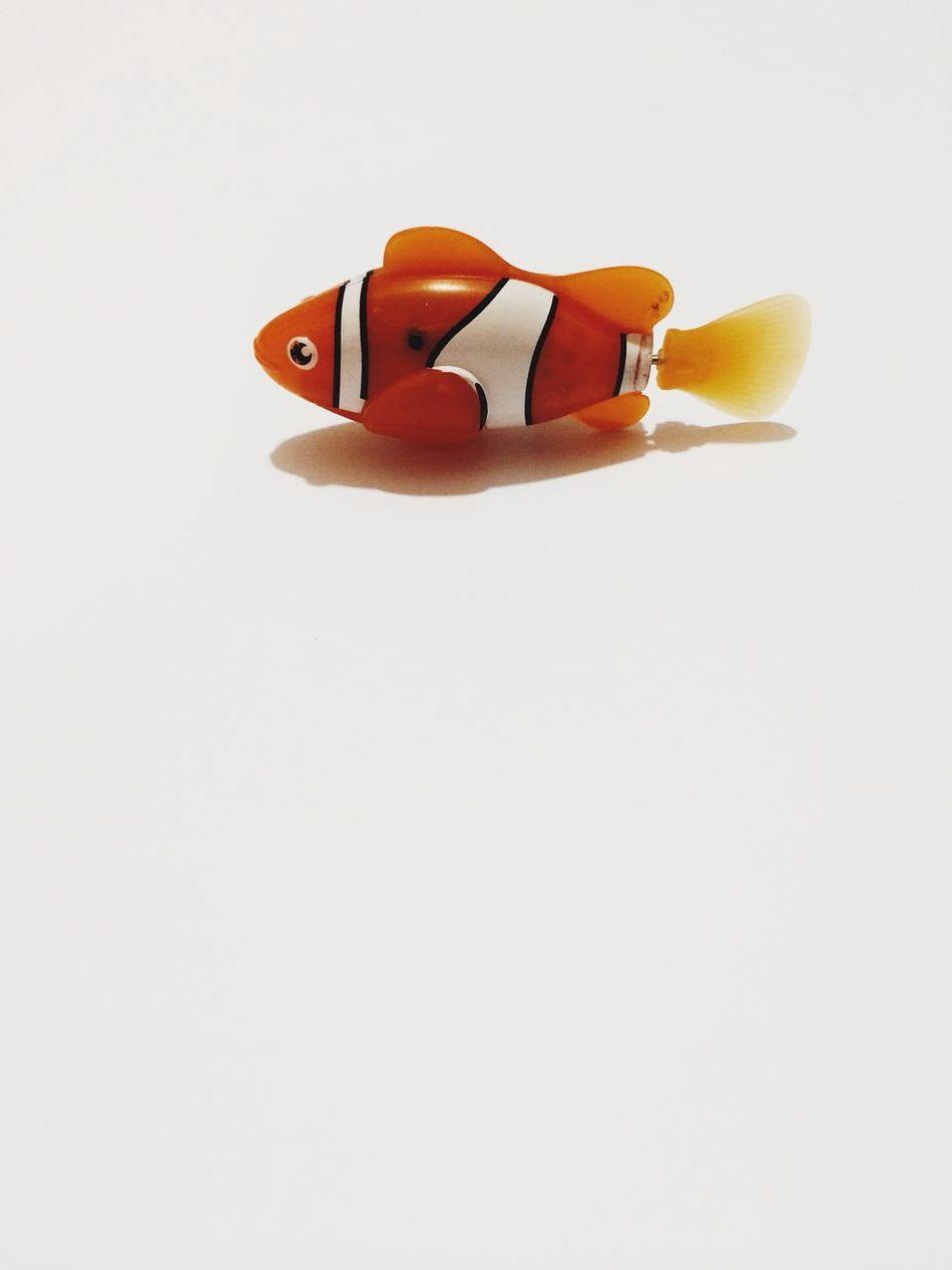 Beautiful stock photos of toys, Animal Representation, Artificial, Childhood, Clown Fish