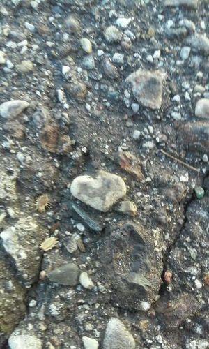 Day Outdoors Textured  Close-up Sunlight Batmansymbol Heart Rocks Pebbles Gravel Grey Pale