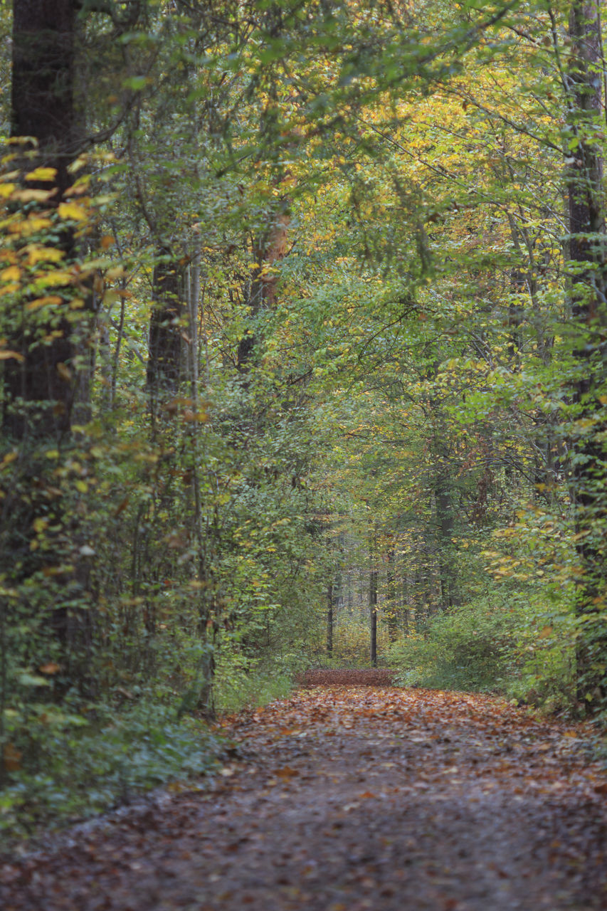 forest, autumn, nature, footpath, tree, tranquility, outdoors, beauty in nature, tranquil scene, no people, day, scenics, leaf, landscape, walkway
