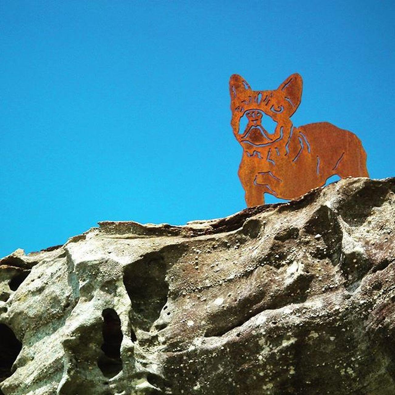 Bondi Bondibeach Rock Dogsofinstagram dog sculpturebythesea blue