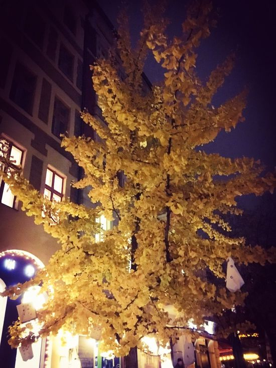 Illuminated Low Angle View Night Tree City Sky Berlinatnight Leaves Yellow