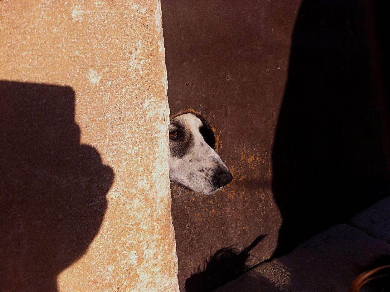 Domestic Animals Animal Themes Mammal Animal Head  One Animal Day Dog Door Rural Scene