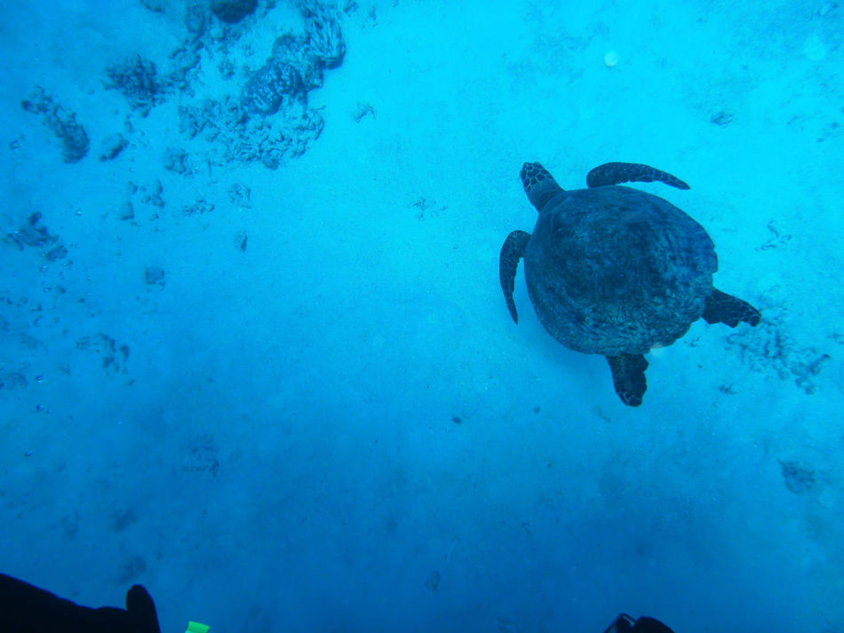 Beautiful stock photos of turtle, Animal Themes, Fish, High Angle View, Nature