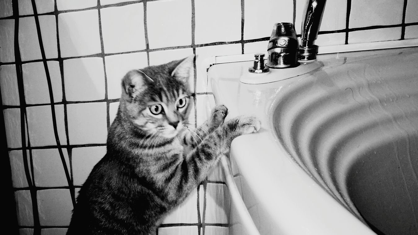 Molly ❤❤ Domestic Animals Domestic Bathroom Indoors  Domestic Cat Tile Water Animal Themes Pets Bathroom Bathtub Taking A Bath Hygiene Domestic Room Feline Cage No People Running Water Nature Close-up Mammal First Eyeem Photo