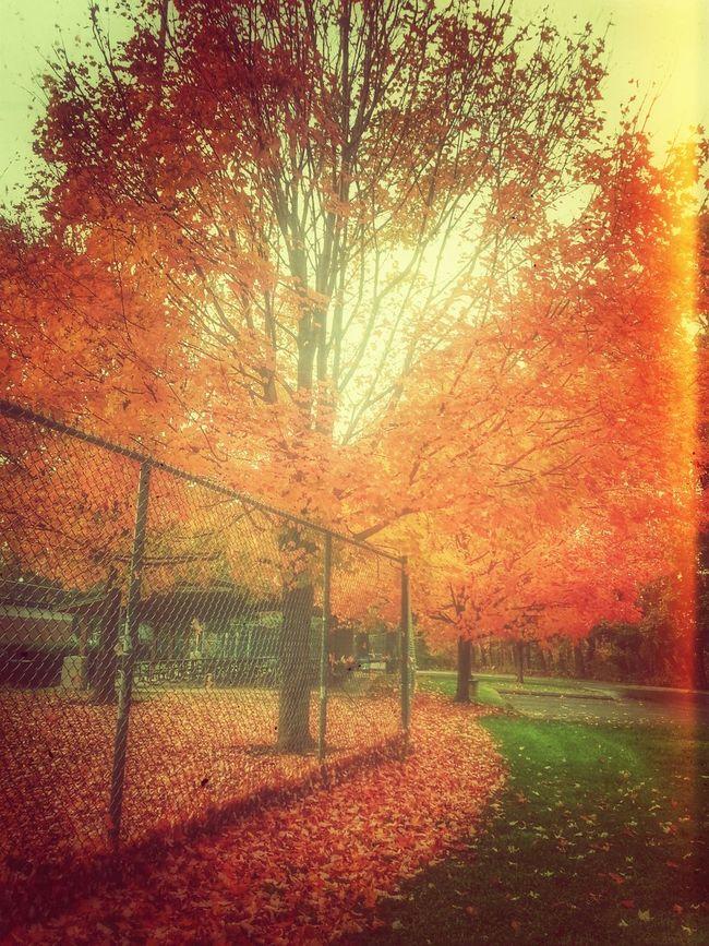 Autumn Dreaming // Droidography NEM Landscapes