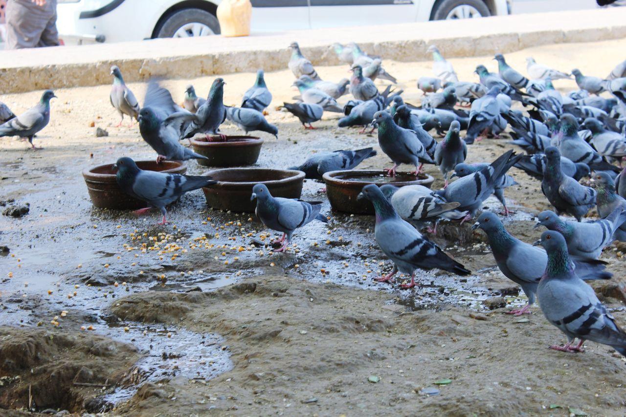 Pigeon Outdoors Day Pigeons Pigeons Everywhere Pigeon Bird  Pigeonslife Bird