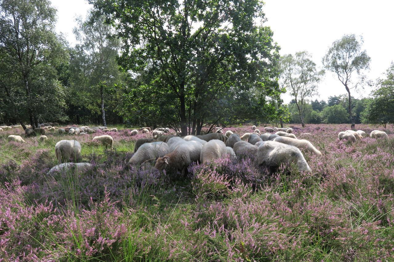 Sheepfarm Sheep Farm Sheep Herding Sheep🐑 Sheeps Sheep