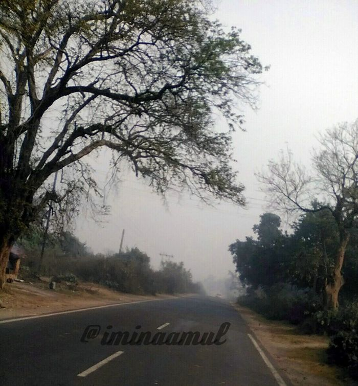 Tree Nature Growth Bare Tree Fog Sky Outdoors No People Day Beauty In Nature Photographylovers Photography LovePhotography Follow Me FollowMeOnInstagram Follow Me :) Photography