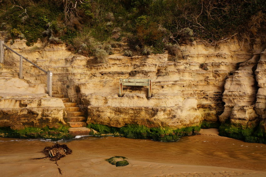 Discovery Walking Around Australia Ancient Ancient Civilization Animal Themes Animals In The Wild Archaeology Architecture Built Structure Day History Mammal Nature No People Old Ruin Outdoors Rock - Object Sand Travel Destinations Tree Water An Eye For Travel
