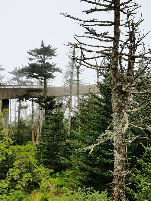 Tree Outdoors No People Day Sky Nature Grass Smoky Mountains Clingmans Dome Cement Industry And Nature Collide Industry Let's Go. Together. EyeEm Selects Tennessee North Carolina Beauty In Nature Growth Forest Green Color Pine Tree Branch Plant