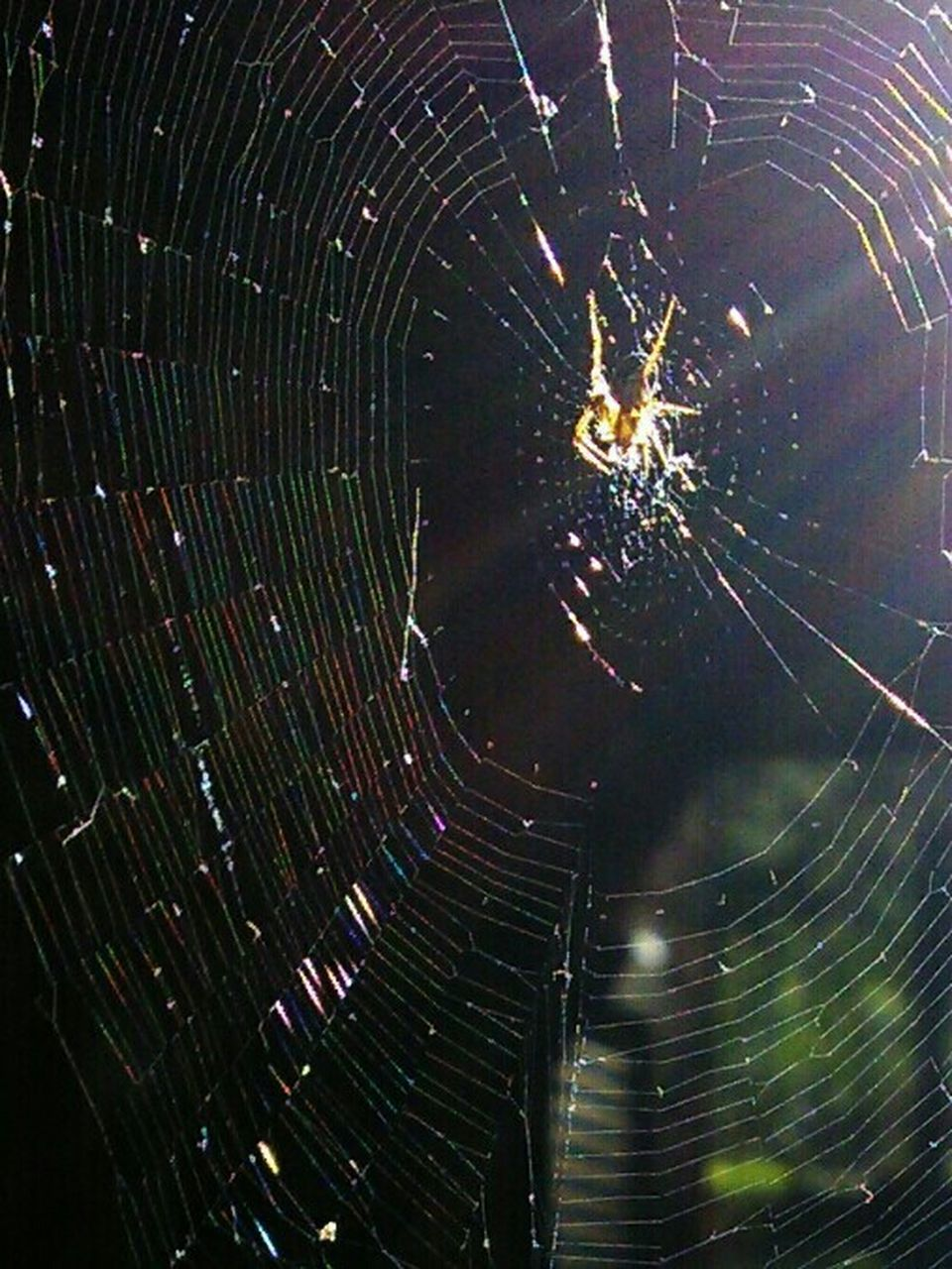 spider, spider web, web, one animal, nature, no people, insect, night, animal themes, outdoors, close-up, animals in the wild, fragility, astronomy, star trail