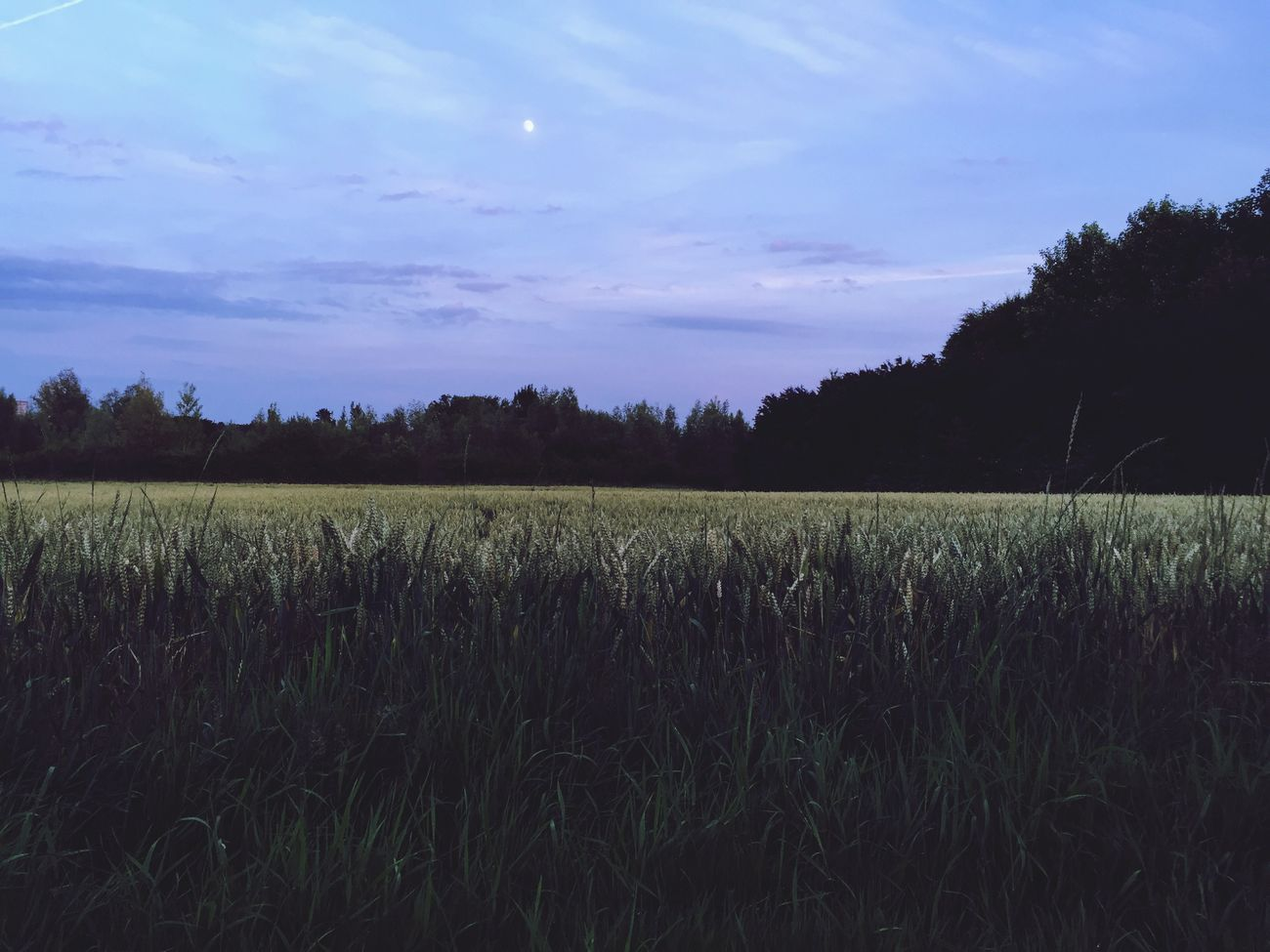 Nighttime Nighttime In The Neighborhood Night Moon Fields Of Gold