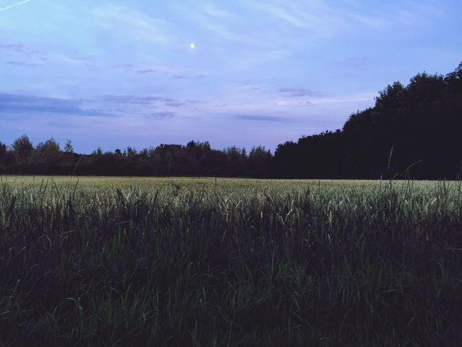 Nighttime Nighttime In The Neighborhood Night Moon Fields Of Gold