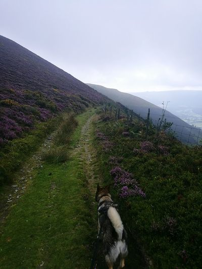 The pupp and I. Walk Alone Mountain Two Landscape Tranquil Scene Green Outdoors Nature Hill Footpath Fog Walking Hike Mist Wales Nature Foggy Loki Wolfdog Northeninuite Gorse Clouds Heather