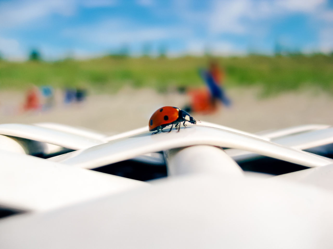 Ladybird on a beach chair Animal Themes Baltic Sea Beach Beach Chair Close-up Day Germany Insect Ladybeetle Ladybird Ladybug Luck Lucky Nature One Animal One Person Outdoors