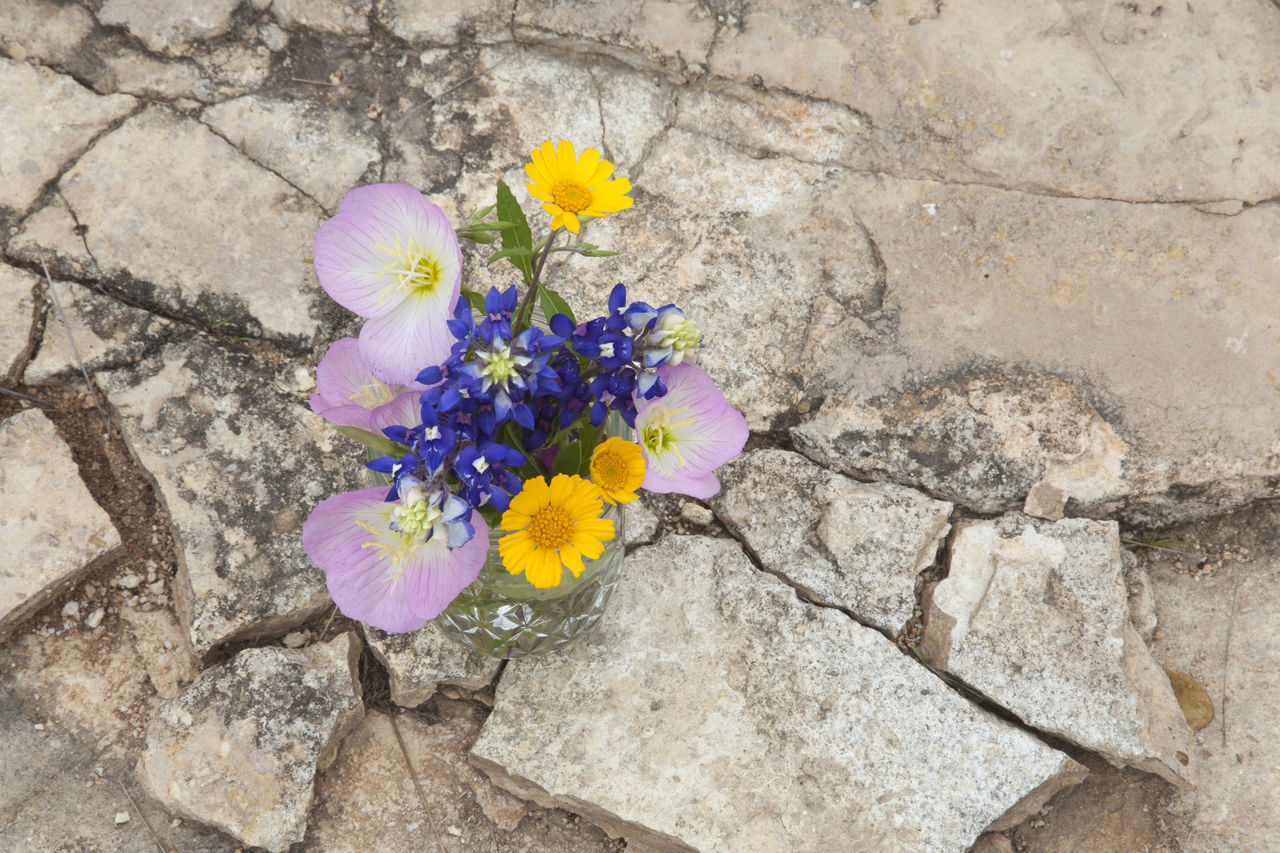 Texas wildflowers in a jar on rocky ground viewed from above Bluebonnets Daisy Flowers High Angle View Jar Overhead View Pink Color Plants Primrose Stone Texas Texas Hill Country Viewed From Above Wildflower Yellow Color