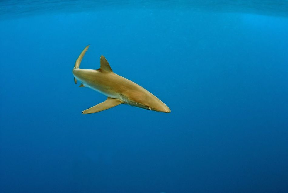 Beautiful stock photos of underwater, Animal Themes, Blue, Clear, Fish