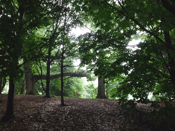 Open Edit Hidden Places Park Forest NYC