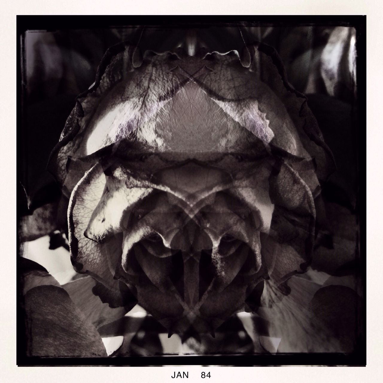 animal skull, close-up, animal themes, no people, one animal, indoors, nature, day, mammal