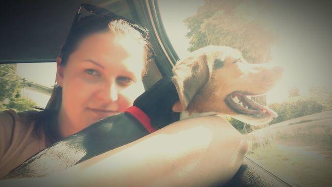 Beagle Love Beagle Car Trip Travelling