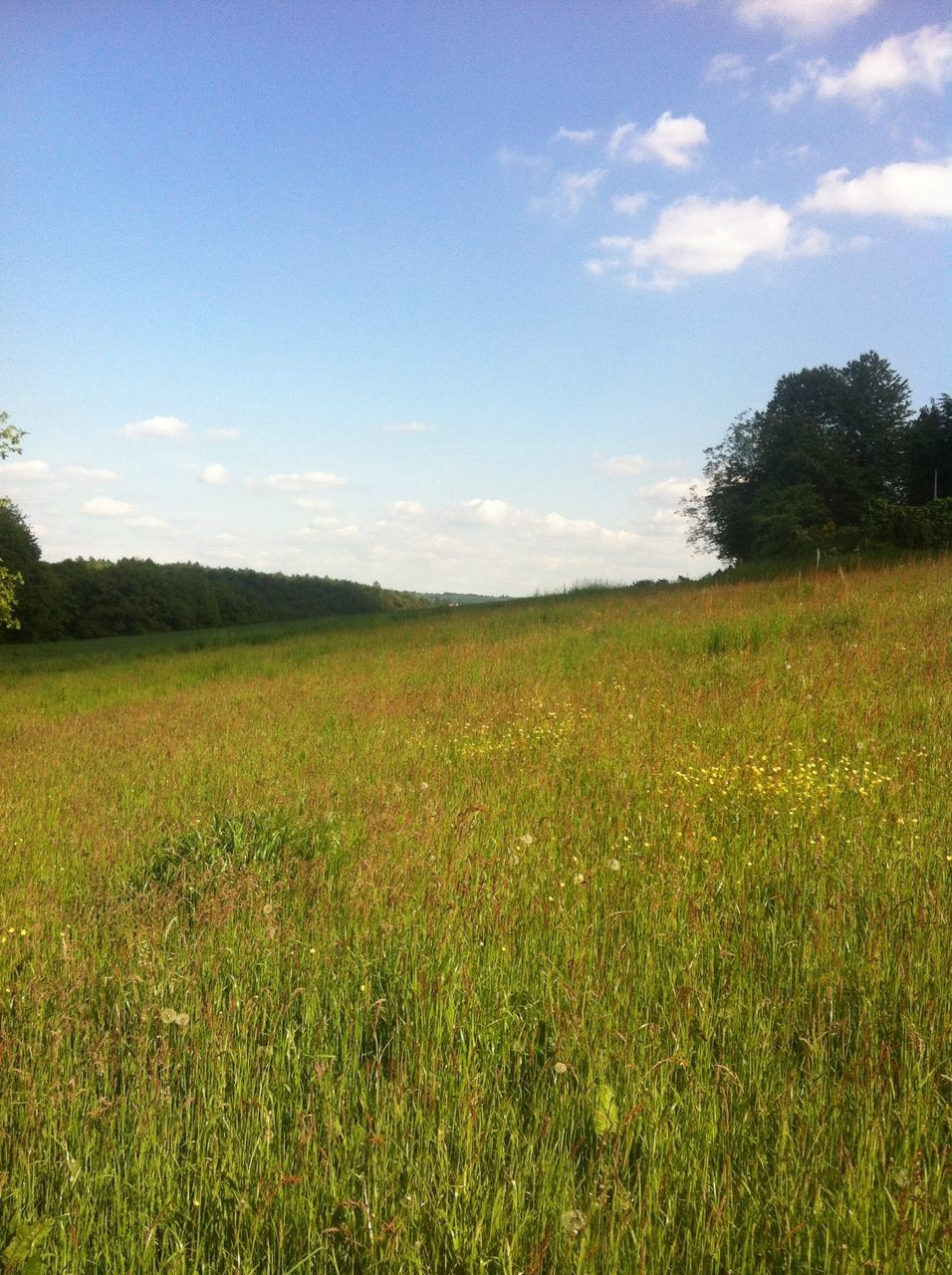 grass, field, landscape, nature, meadow, growth, summer, sky, no people, blue sky, beauty in nature, outdoors, tree, day