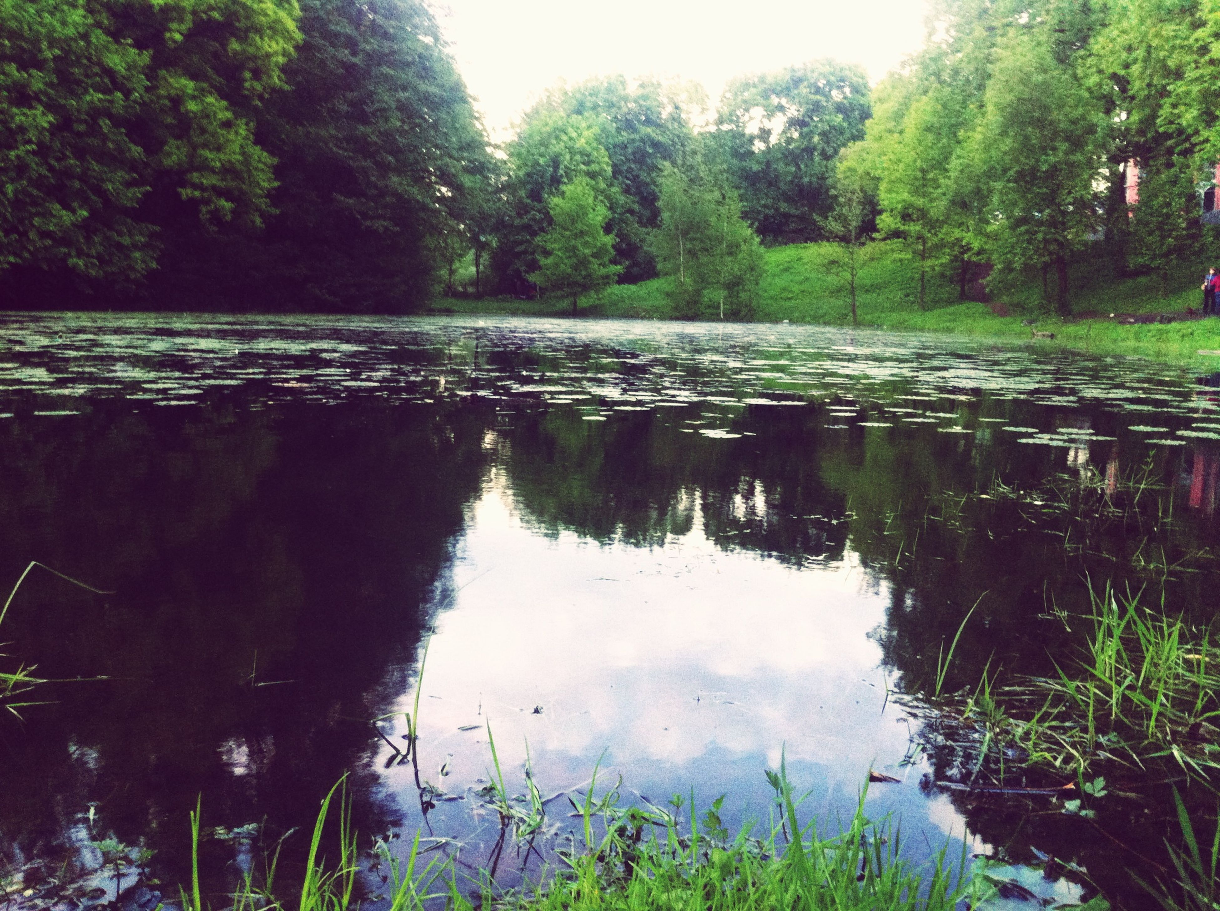 water, reflection, tree, lake, tranquility, tranquil scene, scenics, beauty in nature, green color, nature, growth, standing water, idyllic, plant, day, grass, pond, sky, calm, outdoors