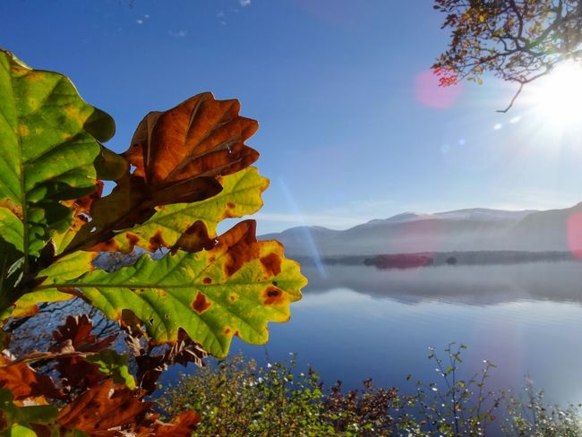 Lake Landscape Mountain Nature Beauty In Nature Hiking Water Scenics Multi Colored Outdoors Tree No People Sky Natural Parkland Day Leaf Leaves Leaves_collection Killarney  Killarney National Park Killarney Lake Killarney Ireland Ireland Irland Irlande