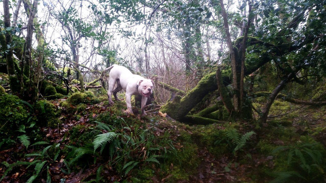 Beautiful stock photos of american bulldog, American Bulldog, Animal Themes, Branch, Day