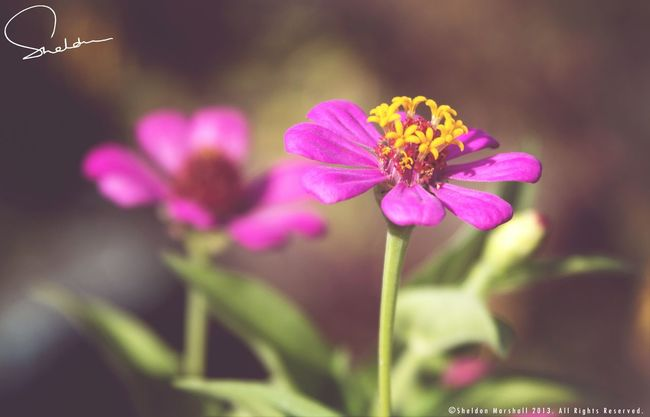 Appreciate the simpler things in life. Eye4photography  NEXTshotPhotos Naturelovers Flowers