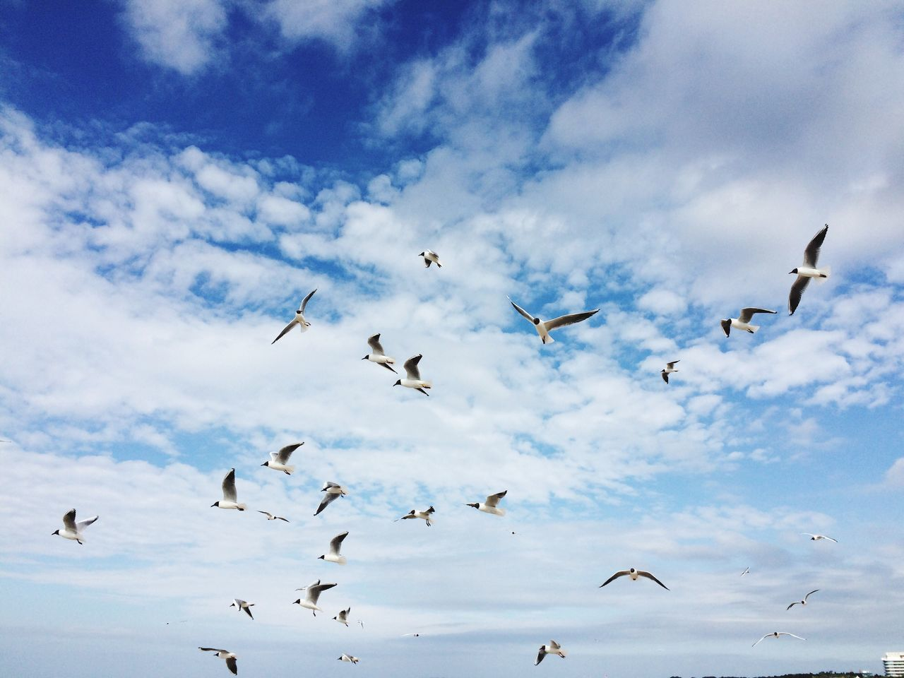 The Birds Bird Flying Animals In The Wild Animal Themes Animal Wildlife Large Group Of Animals Cloud - Sky Flock Of Birds Spread Wings Mid-air No People Day Nature Outdoors Togetherness Beauty In Nature Low Angle View