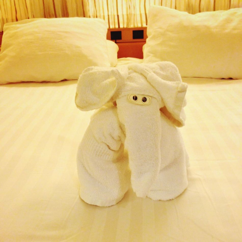 Cruise 2013 Animal Representation Koduckgirl Holland American Lines Towel Animal