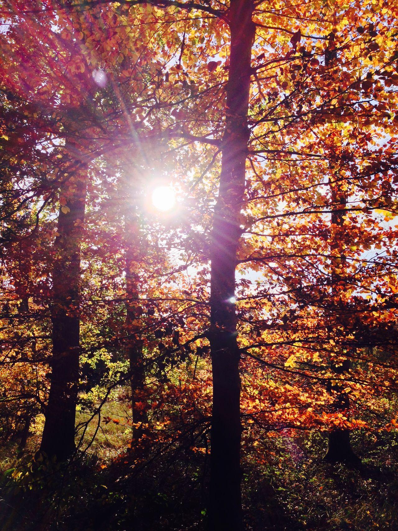 Herbstblumen Im Wald
